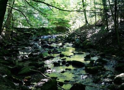 Dookola-swiata: Leśna wyprawa, czyli Tobelweg