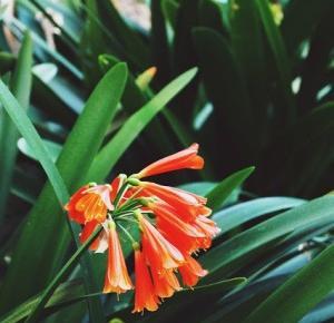 Dookola-swiata: Post fotograficzny - Piękno natury