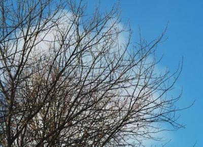 Dookola-swiata: Blogmas #11 - Ostatni rzut okiem na jesień