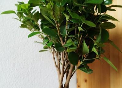 Dookola-swiata: To i owo - Nowości z Ikea