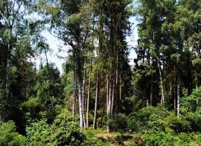 Dookola-swiata: Park Seleger Moor, czyli czy warto zapłacić za kontakt z naturą?