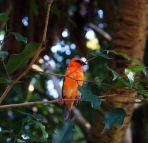 Dookola-swiata: Masoala Regenwald
