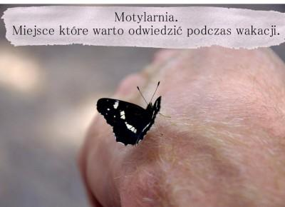 Dorota Pisze.pl: Motylarnia. Miejsce które warto odwiedzić podczas wakacji.