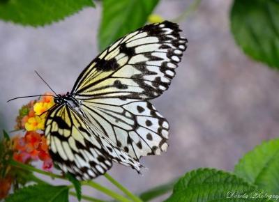 Fotografie Doroty: W krainie Motyli