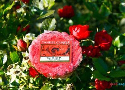Dorota Pisze.pl: Zapach do domu. True Rose od Yankee Candle, oraz wycieczka do Krakowa