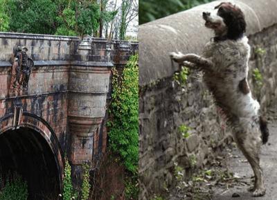 Z tego mostu rzuciło sięjuż ponad 600 psów. Naukowcy chcieli wyjaśnić zagadkę ich śmierci