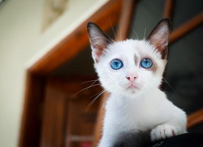 Do czego fotografowi potrzebny jest kot? | Psychologia fotografii