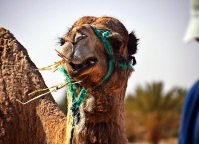 Maroko - must see na mapie każdego podróżnika. Rekomendacja subiektywna. - Blog EstaTravel.pl