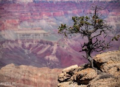 Grand Canyon - najlepszy punkt widokowy? - fotografwdrodze.pl