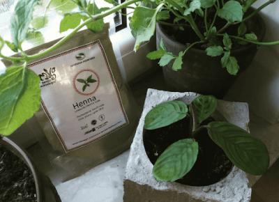 Henna Miksologia - premiera i szybkie testowanie   gnome household