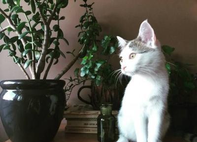 Jak przygotować wyprawkę dla kota?