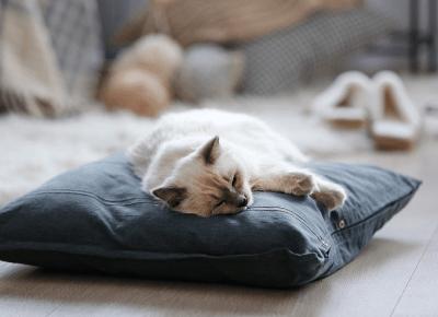 Czy Twój kot kiedyś ugniatał Cię łapkami? Dowiedz się co to oznacza!