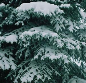 Ayuna: Getting closer to winter.
