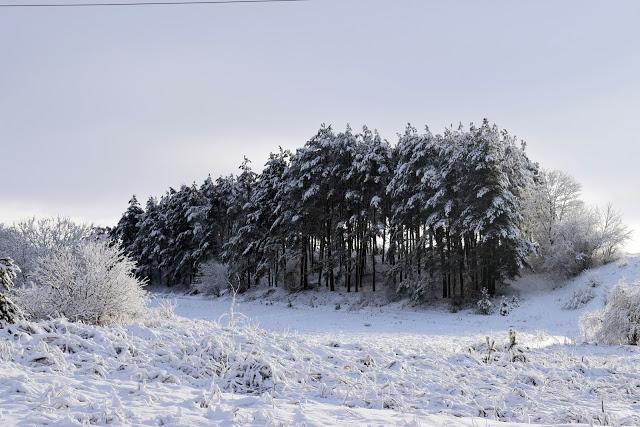 Zima w obiektywie | Simply my life