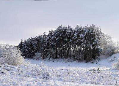 Zima w obiektywie                   Simply my life