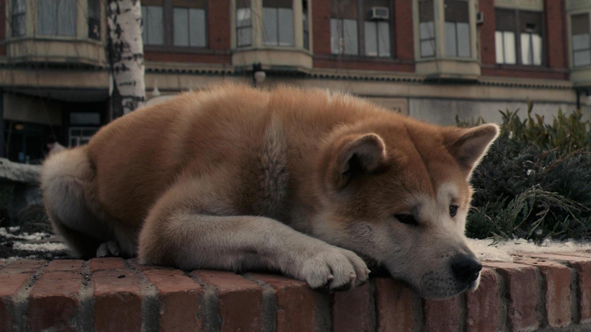 9 Filmów z psem w roli głównej