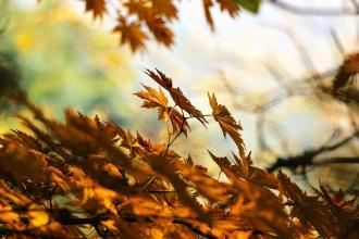 Ta lepsza strona jesieni