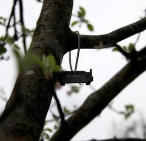 Pasje Weroniki: Fotografia macro