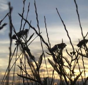 Pasje Weroniki: Ostatni tydzień