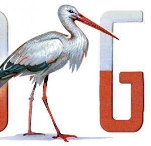 Bocian zamiast orła - czyli 11 listopada na Google Doodle - Ilona Kasprzycka | LIFESTYLE BLOG