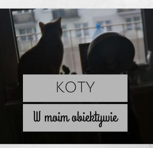 Koty w moim obiektywie- fakty o bohaterze bloga!
