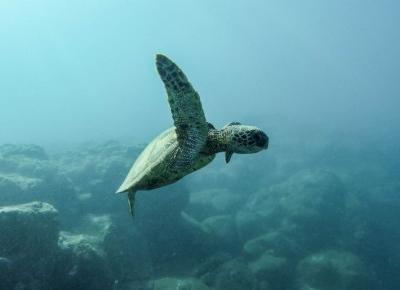 BAKTERIA, KTÓRA ZJADA PLASTIK I ZAMIENIA GO W WODĘ RATUNKIEM DLA OCEANÓW?