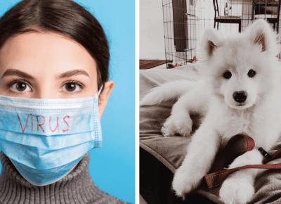 Koronawirus u zwierząt domowych: czy jest się czego obawiać?
