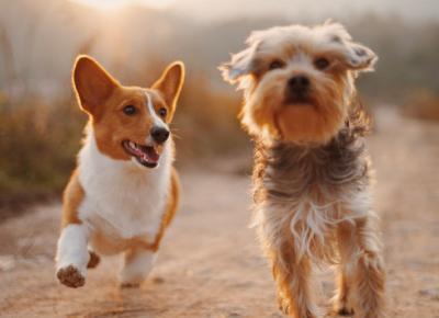 Powstała aplikacja do adopcji psów! Jak działa psi Tinder?