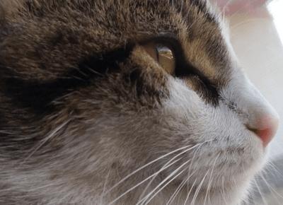 Ciekawostki o kotach, których mogłeś nie znać