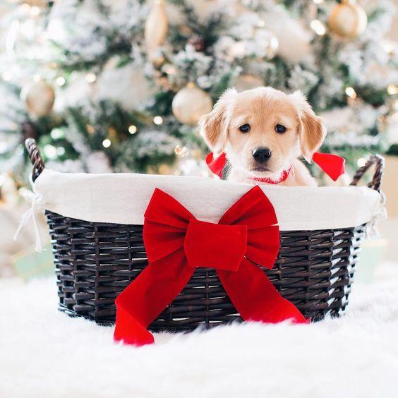 cute dog 🐾🐶