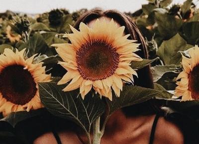 Pomysły na kreatywne zdjęcia ze słonecznikami 🌻