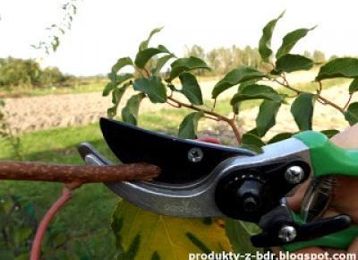 Test: Sekator nożycowy Gardenic z Biedronki