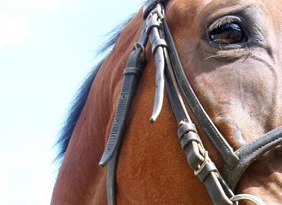 dlaczego zakończyłam swoją historię z jeździectwem?
