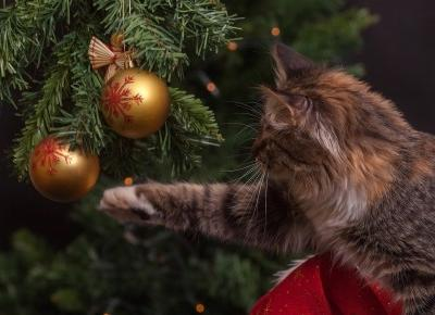 Jak nie zbankrutować w Święta Bożego Narodzenia? - Kasia Basara