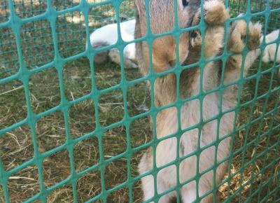 Drobnostki...: Jestem w raju! :) Czyli zwierzęta na targach agroturystycznych.