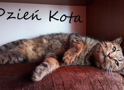 Koci punkt widzenia: 10 ciekawostek o kotach | Dzień Kota