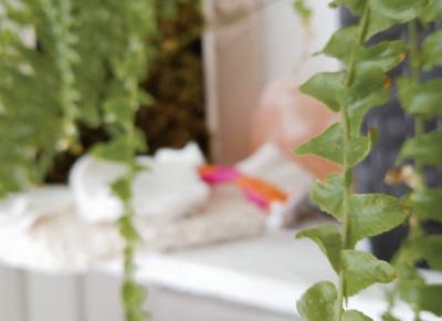 Koci punkt widzenia: 5 sposobów na ekologiczną łazienkę, które odciążą twój budżet