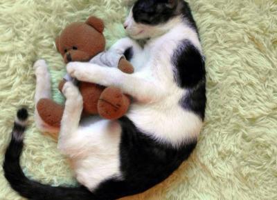 Koci punkt widzenia: O czym trzeba pamiętać, decydując się na kota?
