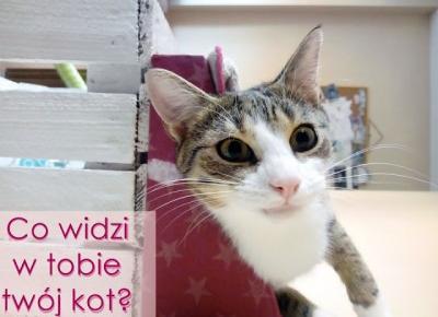 Koci punkt widzenia: Co widzi w tobie twój kot?