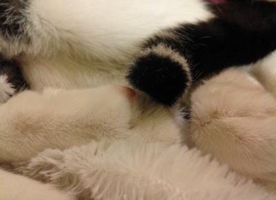 Koci punkt widzenia: Koci punkt widzenia: Instrukcja obsługi człowieka (pisana przez kota oczywiście)