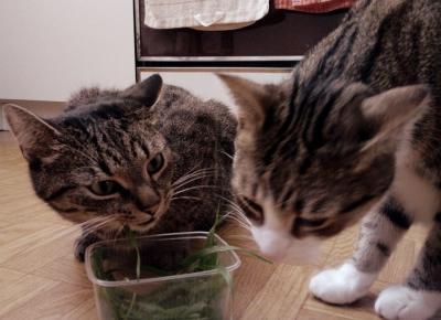 Koci punkt widzenia: 10 przykazań kocich | Koci Punkt Widzenia