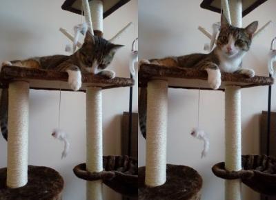 Koci punkt widzenia: Kocie urodziny | drapak