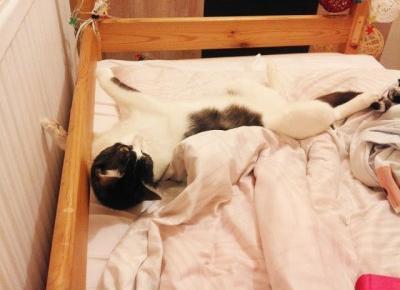 Koci punkt widzenia: Koci punkt widzenia: Wujku Kot... Wujku Kot!