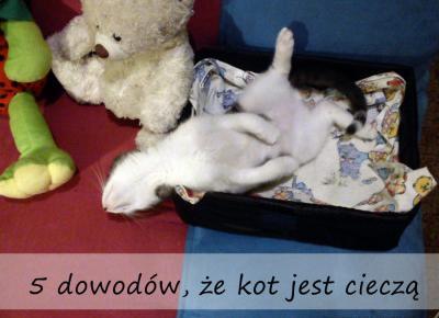Koci punkt widzenia: 5 dowodów, że kot jest cieczą