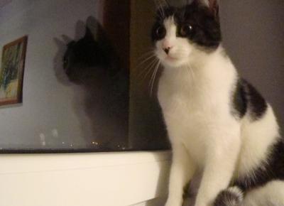 Koci punkt widzenia: Gdyby kot mógł sam się przedstawić