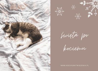 Koci punkt widzenia: Święta po kociemu | koci punkt widzenia