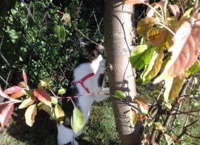 Koci punkt widzenia: Kot vs rośliny