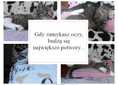 Koci punkt widzenia: Koci punkt widzenia: spanie z kotem to wyzwanie