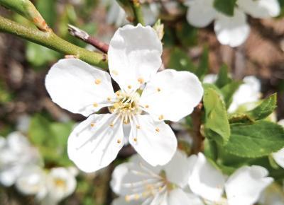 Koci punkt widzenia: Moje małe (wiosenne) przyjemności