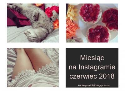 Koci punkt widzenia: Koty, jedzenie i ja | Instagram